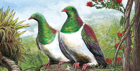 Just in time for the Great Kereru Count – New Book Launched