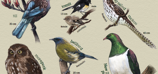 Free Downloadable Forest Birds ID Card