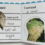Create Your Own Nature Journal – for children