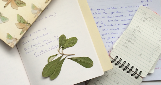 Writing a Nature Journal – for adults